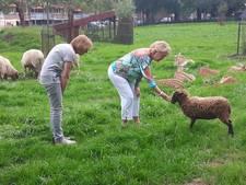 Kinderboerderij De Bossche Hoeve wil kennis over natuur beter overdragen