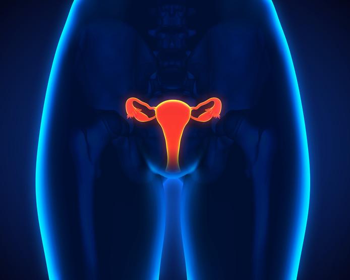 Eileiders in het vrouwelijk lichaam.