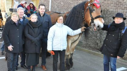 Provincie geeft Brabants trekpaard duwtje in rug