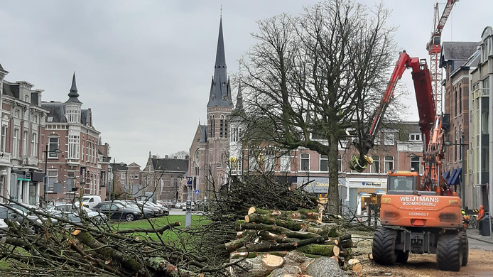 Nog één kastanje te gaan in de Parkstraat in Breda.