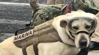 'Superhond' Frida heeft in Mexico al meer dan 50 mensen gered