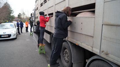 Dierenrechtenactivisten voeren vreedzaam actie aan slachthuis Ruiselede