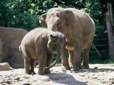 """Des internautes rachètent un zoo pour libérer les animaux: """"Un pari complètement fou"""""""