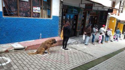 Hond wacht braaf in de rij voor de supermarkt namens zijn baasje