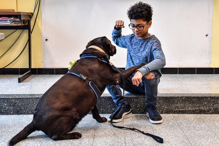 """""""De honden zorgen ervoor dat kinderen aan hun assertiviteit kunnen werken"""", zegt juf Ann Gregoor."""