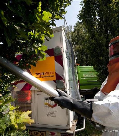Eikenprocessierups nestelt in 600 Bornse bomen