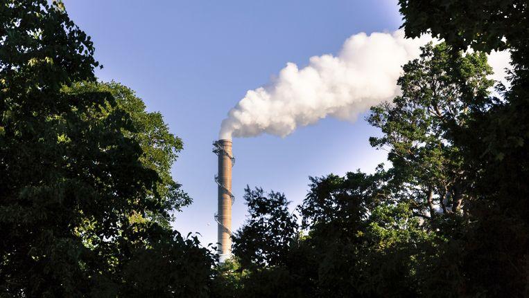 Planten en bomen nemen 16 procent meer CO2 op dan tot nu werd gedacht. Maar of het volstaat om de klimaatverandering te vertragen, is maar de vraag.