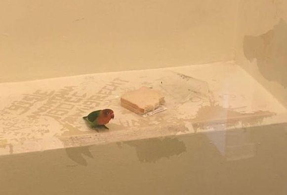 De vogel werd samen zijn baasje - een verdachte winkeldief - opgesloten in de cel.
