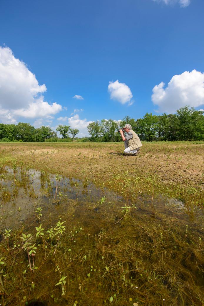 Henk Sierdsema bij de poel, die nu al grotendeels droog is komen staan.