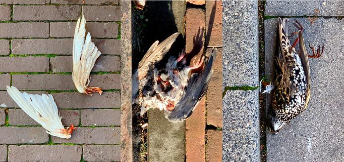 Dode vogels bij de toren van Van Lanschot