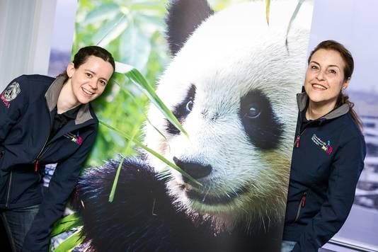 Brenda van Ekeren (links, 34) en collega Marga werken met de reuzenpanda's in Ouwehands Dierenpark.