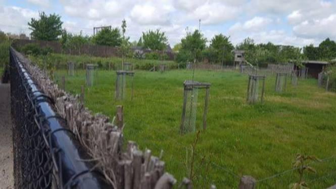 Groen wil verkoop van lapje groen terugdraaien, maar nieuwe eigenaar weigert
