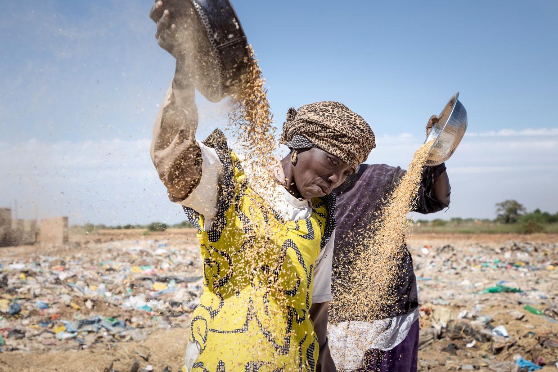 Arme vrouwen zeven rijstafval om het zelf te gebruiken of te verkopen.