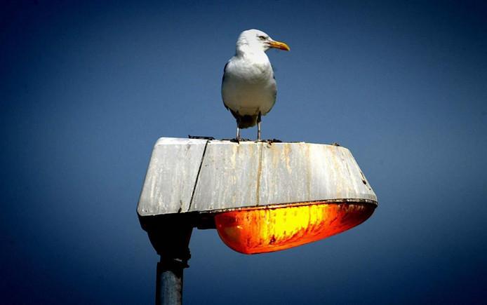 stockadr verlichting straatlantaarn lantaarn licht lamp meeuw