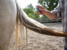 Il coupe la queue d'un cheval pour en faire des pinceaux