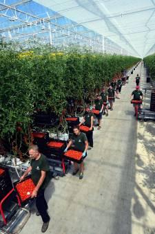 Arbeidsmigranten in Altena moeten in eigen gemeente aan de slag