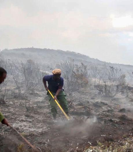 Brand op Kilimanjaro breidt zich uit: toeristenkamp geëvacueerd