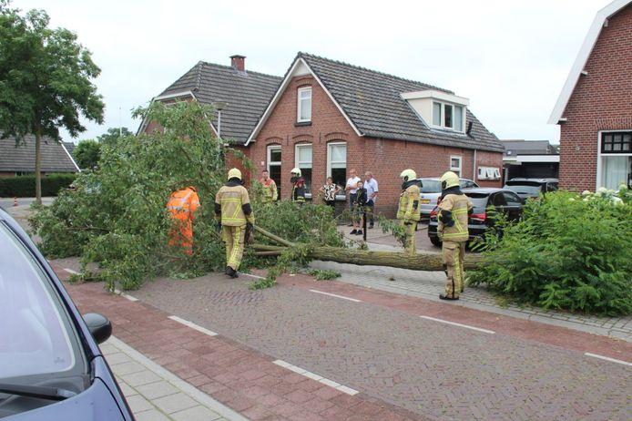 De omgevallen boom.