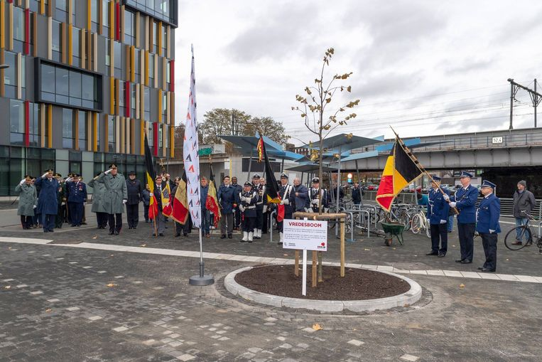 Voortaan staat er voor het nieuw stadhuis een vredesboom.