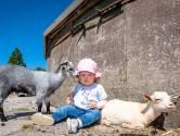 Geitjes, kalfjes en kuikentjes: je kunt ze weer heerlijk knuffelen op de kinderboerderij