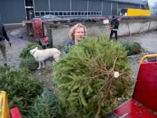 Sympathie in wijde regio voor duurzame toepassing kerstbomen in Vinkenbuurt