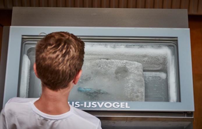 Een hit op internet en nu in het echt te zien: de ijsvogel in een blok ijs.