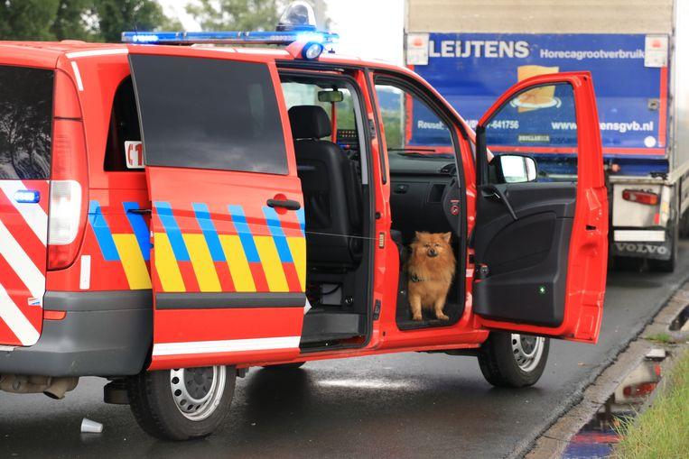 De brandweer nam 'Snoopy' mee naar de kazerne waar familie van de trucker het dier kwam ophalen.
