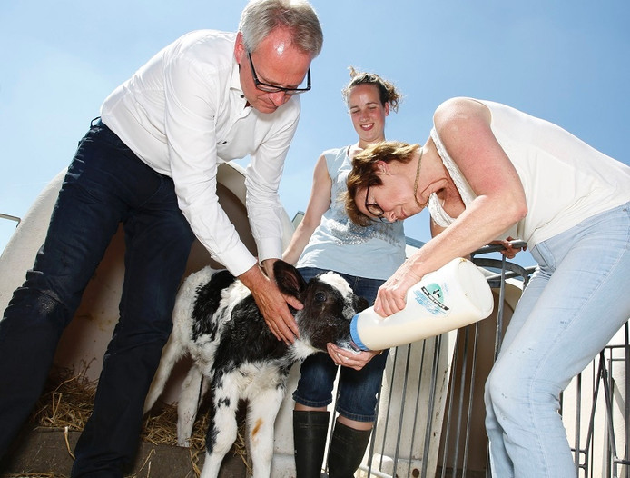 Han Polman (CdK) en gedeputeerde Carla Schonknecht geven kalfje melk geholpen door Ils van de Meijdenberg (midden)