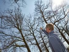 Massaal gekapte bomen in Lochem kunnen niet voorkomen dat krijsende roeken zijn teruggekeerd