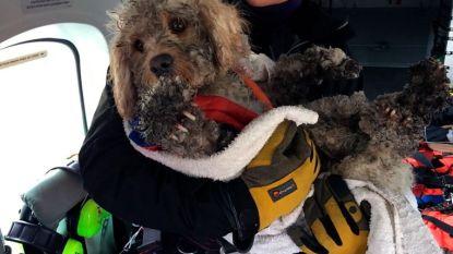 Een week goed nieuws: helikopter redt hond na 48 uur in bar weer en andere verhalen die je blij maken