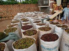 'Waardeloze schil' van koffiekersen kost nu vijf keer meer dan bonen zelf