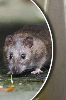 Utrechtse wijkagent ontdekt dat leegstaand pand in de stad 'half opgegeten is door ratten'