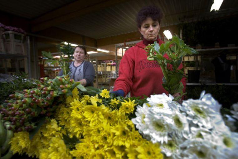 FloraHolland, waarvan de veiling deel uit maakt, verwacht voor dit jaar een omzetstijging van een procent. Foto ANP Beeld