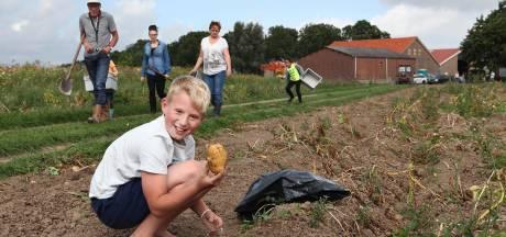 Zelf groenten van land halen? Dat kan bij boer Martin de Ruiter in Strijen