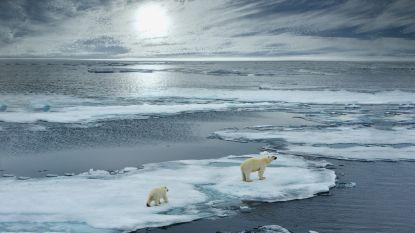 """Meer dan 11.000 wetenschappers roepen """"klimaatnoodtoestand"""" uit: """"Mensheid moet in actie komen"""""""