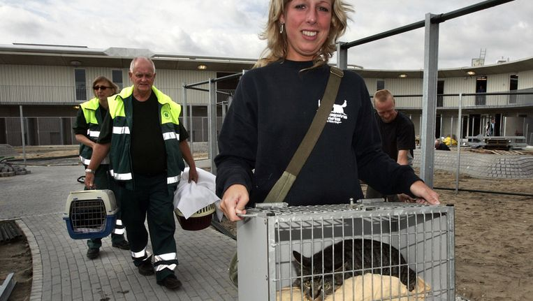 Poezen arriveren bij de dierenopvang aan de Ookmeerweg in Amsterdam. Beeld anp