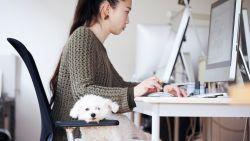Minder stress én een betere sfeer: de voordelen van honden op kantoor