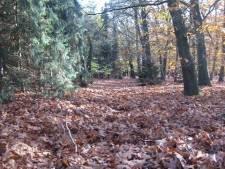 Dronken inbreker verstopt zich onder laag bladeren op grasveld in Roosendaal