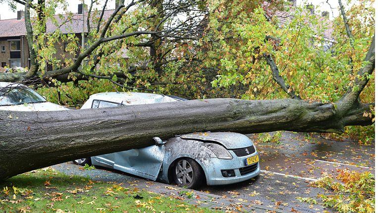 Een boom is na een hevige storm op een auto gevallen in Tilburg. Beeld anp