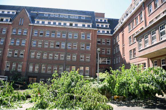 De afbraak van de Verpleegstersschool in Leuven is al vele jaren een twistpunt. De gekapte linde van 90 jaar oud is nu een symbool geworden in de strijd.