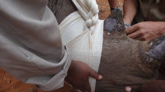 De neushoorn krijgt een rhino tracker.