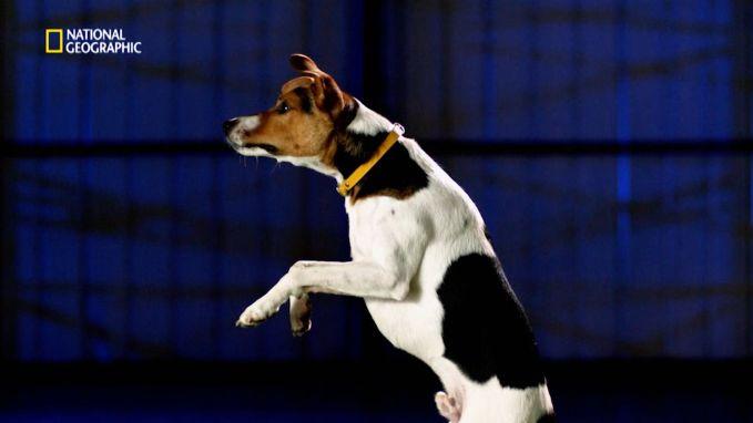 Dit is waarom honden zo hoog kunnen springen