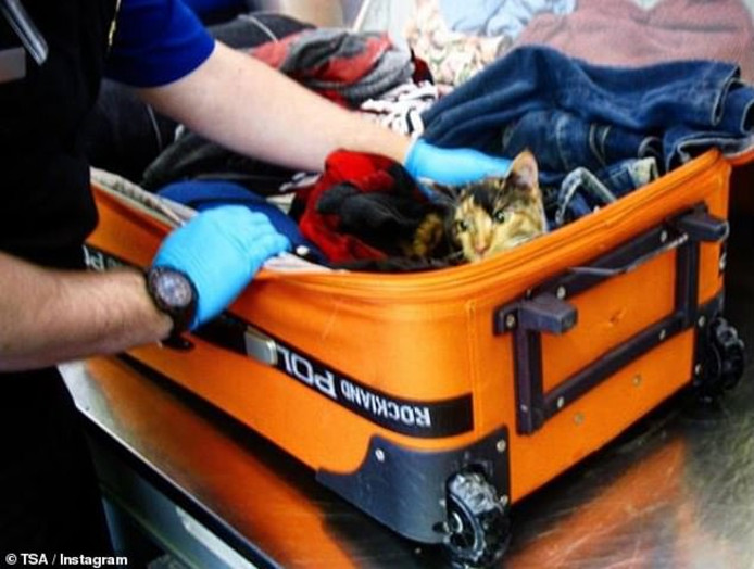 Schattig, een poesje, maar wel verboden in een koffer zonder zuurstof