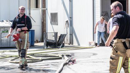Brand bij Kipstar in Wortegem: grote rookontwikkeling, maar vuur snel geblust