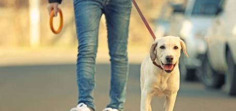 Hondenbezitters in Emmen opgelet! Politie waarschuwt voor muizengif langs de weg