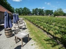 Horeca kritisch: boerenterras in Berg en Dal moet in de zomer om 21.00 uur dicht, feesten mag niet