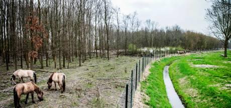 LIVE: Dag van de waarheid voor grote grazers Oostvaardersplassen
