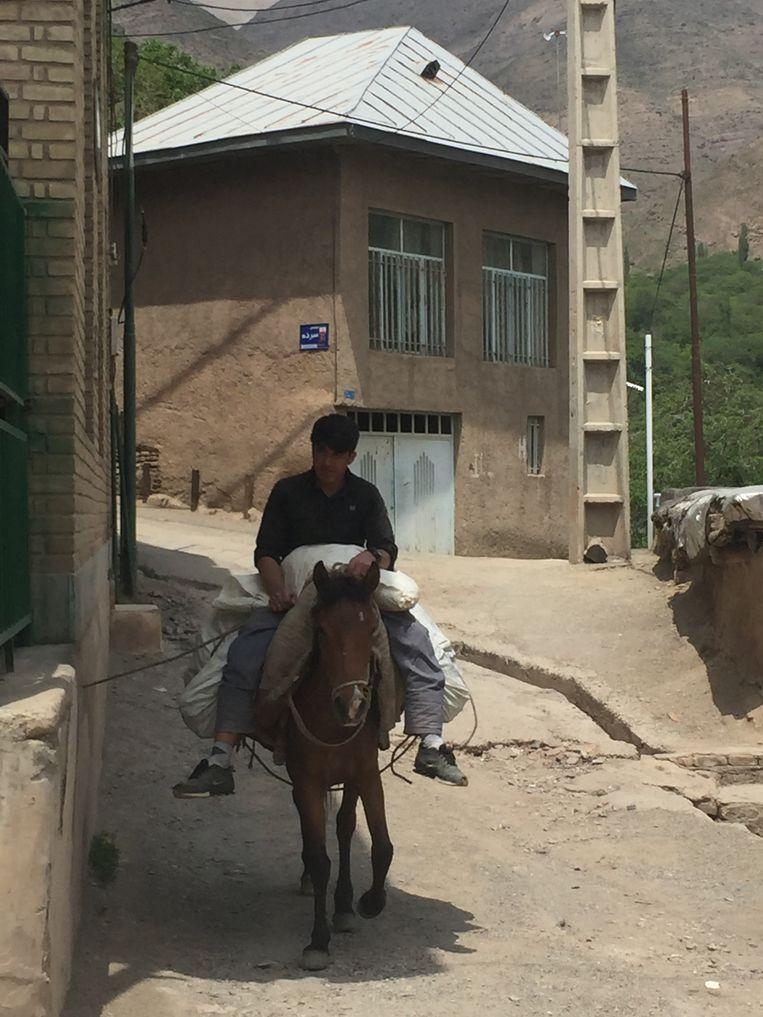 In Barg-e Djahan ('Blad van de wereld') lopen overal ezels, zoals het een goed dorp betaamt. Beeld Carolien Omidi