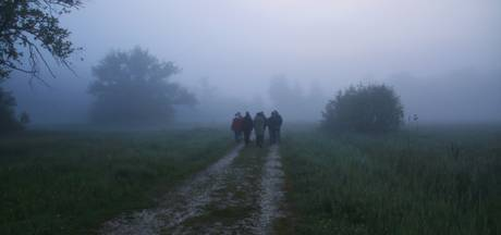 Dauwtrappen in de natuur van Groesbeek en Overasselt