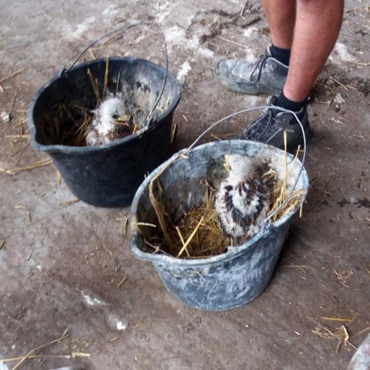 In totaal werden negen 'illegale' vogels in beslag genomen.